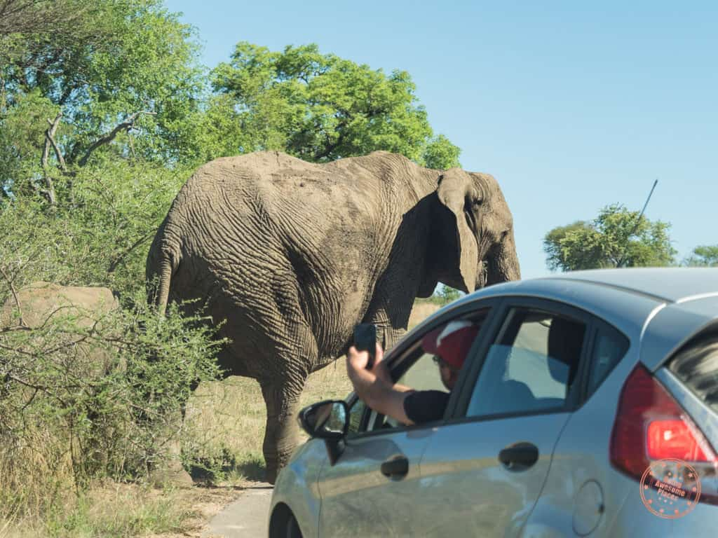 keeping a safe distance from elephant during self drive