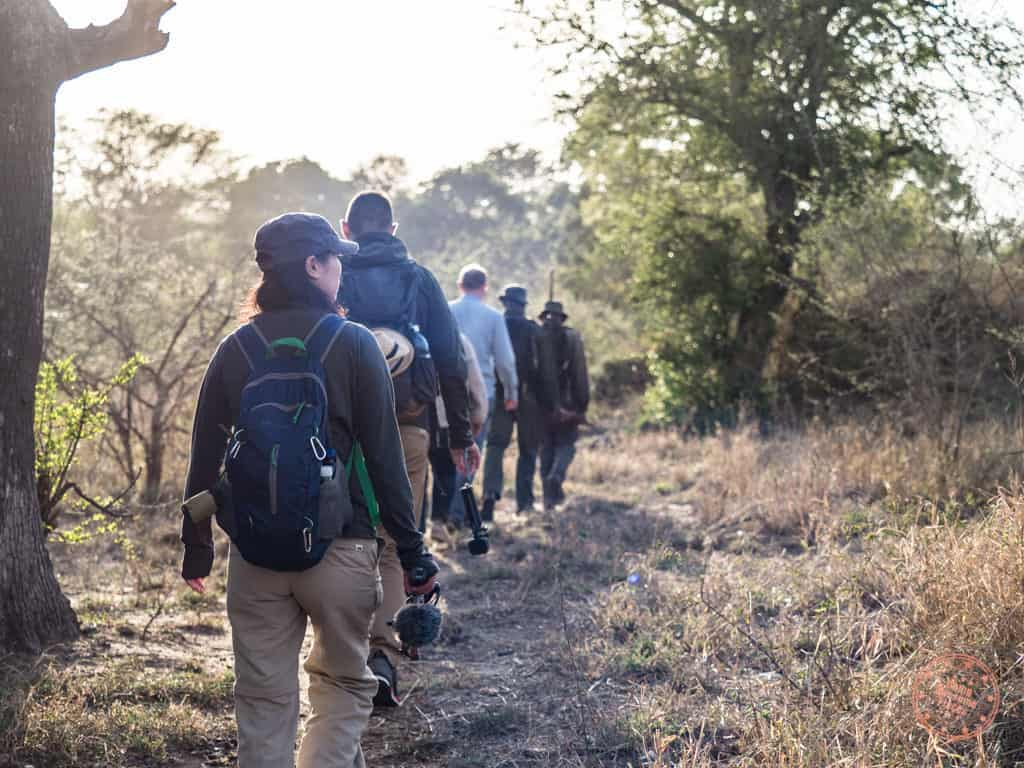 how to plan a safari in south africa morning bush walk at kruger national park from lower sabie camp