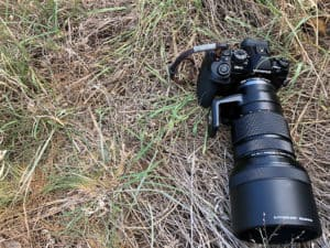 safari photography set up with olympus omd gear