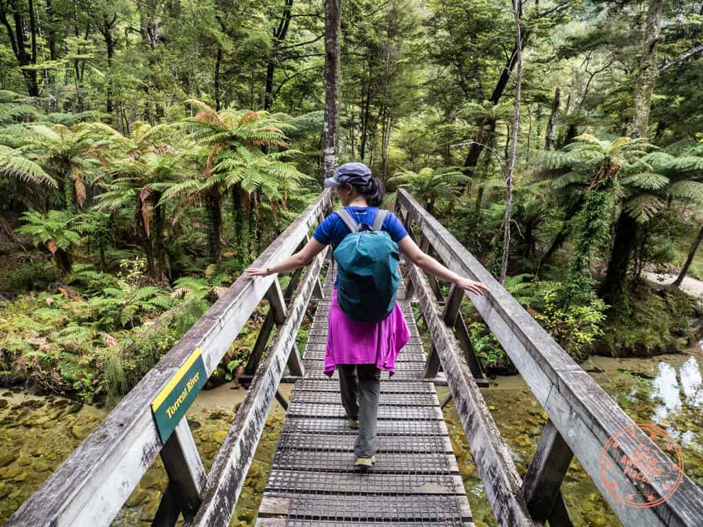 hiking abel tasman national park with flying kiwi