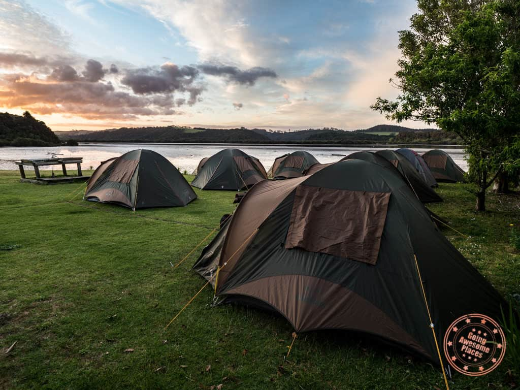paihia campsite tents new zealand with flying kiwi