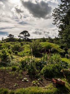 vegetable garden in the shire