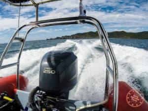 paihia dive boat