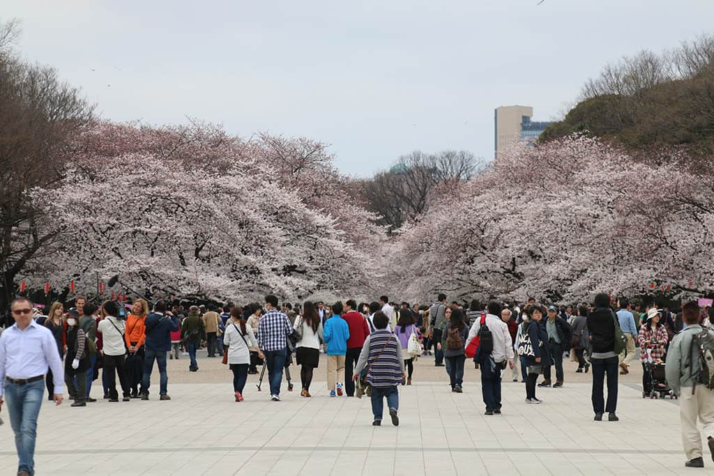 ueno neighborhood is great place to stay in tokyo - ueno park during sakura