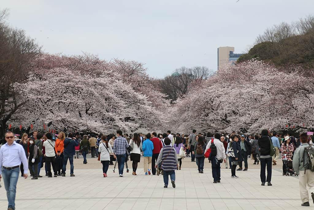 ueno neighborhood is great place to stay in tokyo - ueno park during sakura