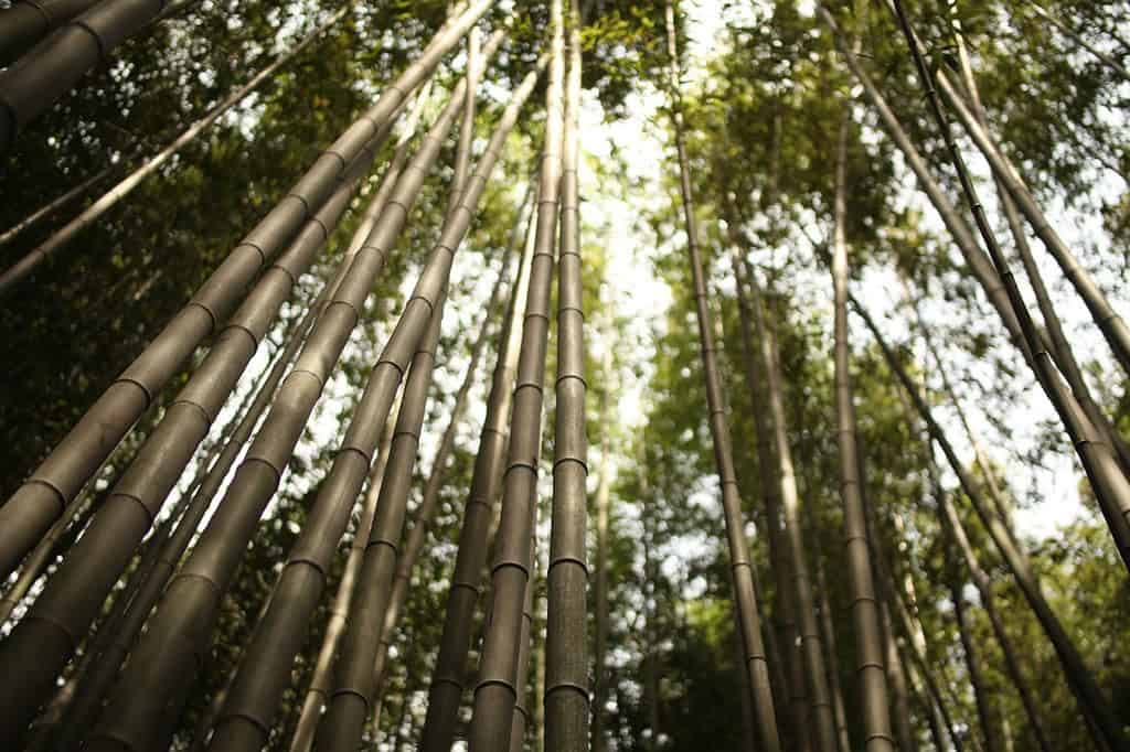 arashiyama bamboo grove forest kyoto neighbourhood guide