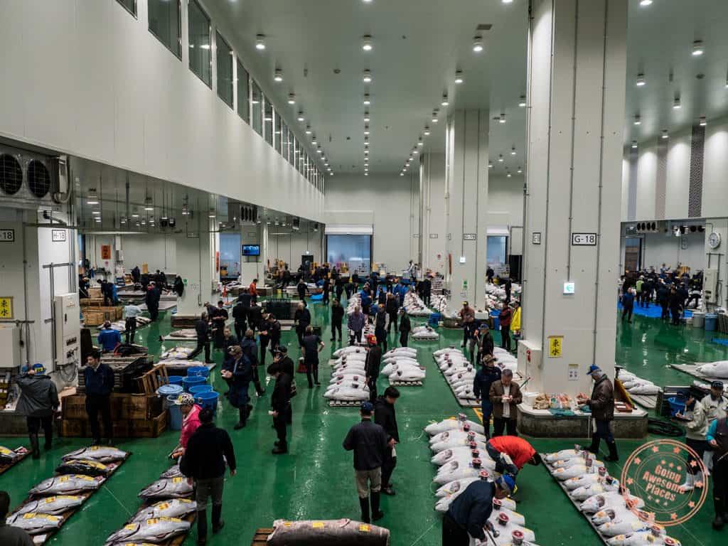toyosu fish market tuna auction observation deck