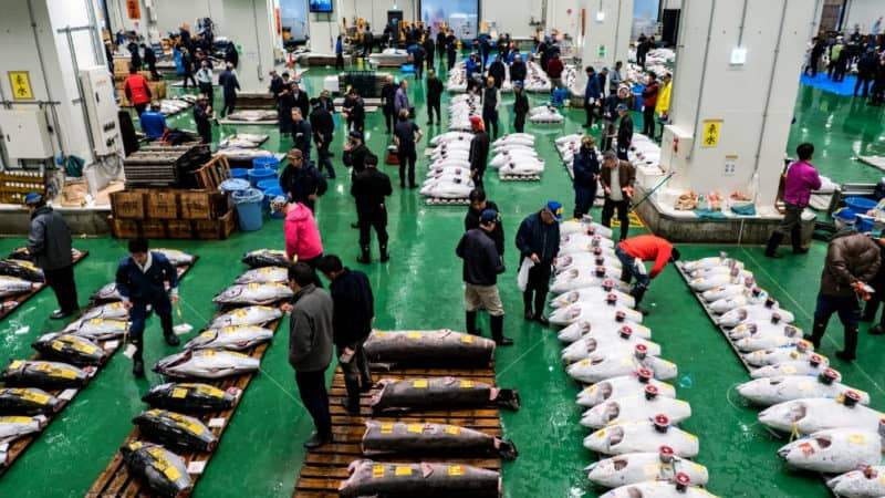 how to apply for toyosu fish market tuna auction observation deck lottery
