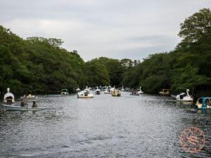 kichijoji things to do inokashira park with swan boats