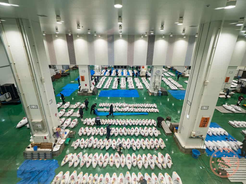 see the scale of the tuna auction at toyosu fish market in tokyo