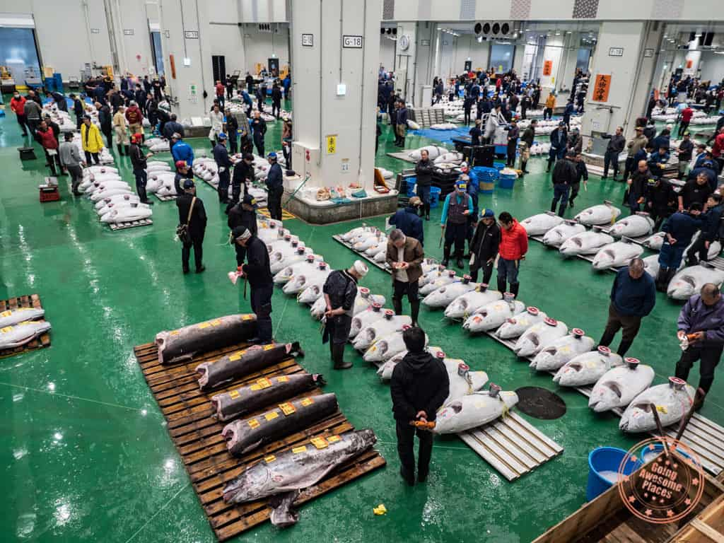 toyosu fish market tuna auction floor tokyo