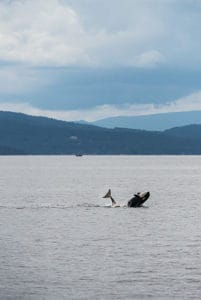 top things to do in richmond bc highlight whale watching