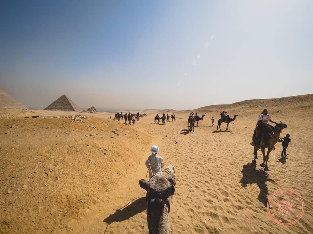 camel riding at panorama in giza near the pyramids