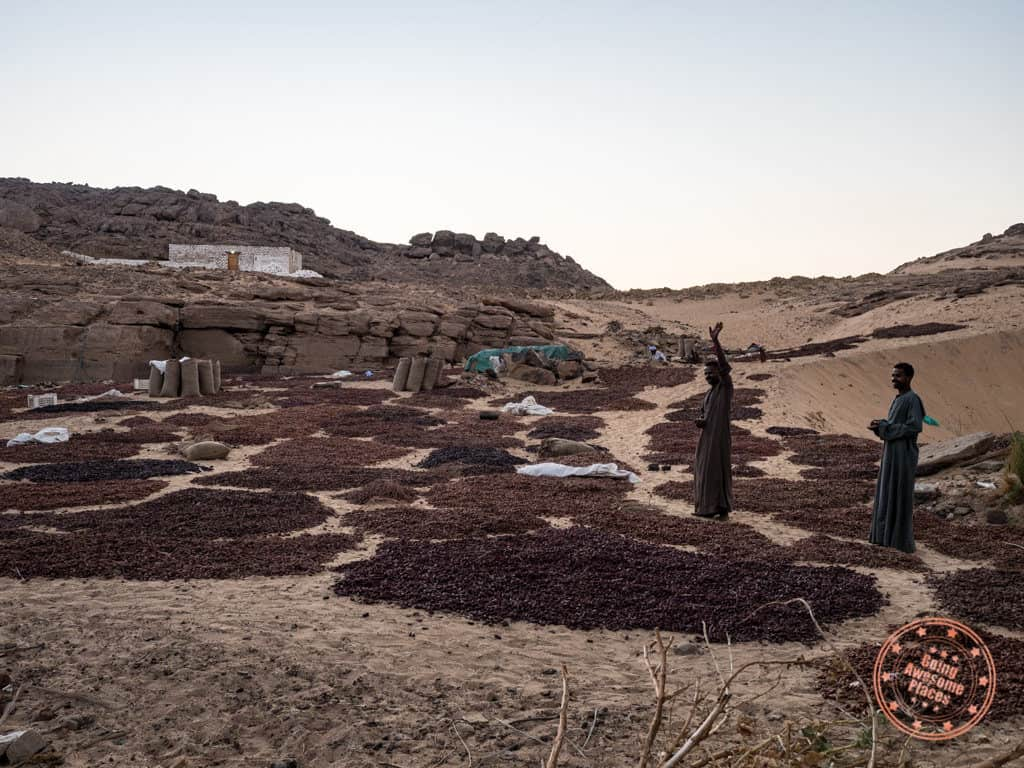 drying figs near el hamam village