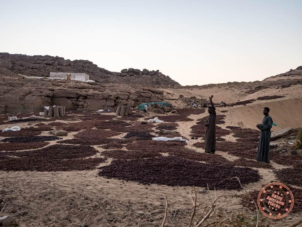 drying figs near el hamam village