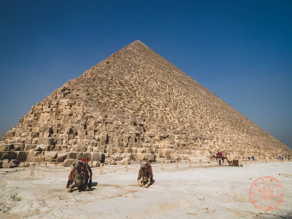 great pyramids of giza and camels in cairo egypt