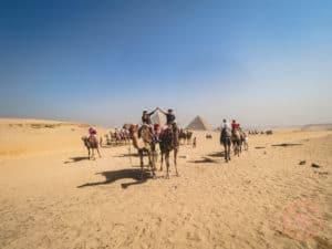 camel riding pyramids giza cairo experience