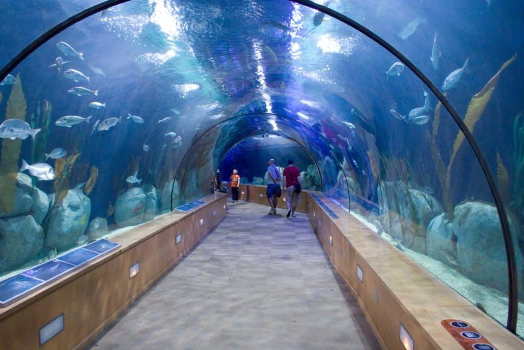 oceanographic thing to do in valencia