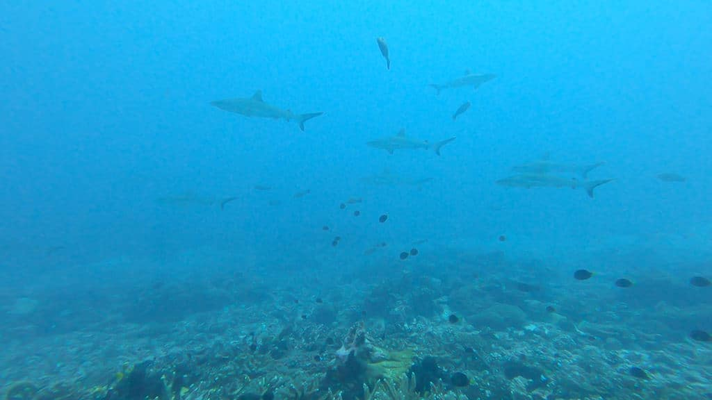 fakarava diving with sharks in the islands of tahiti itinerary