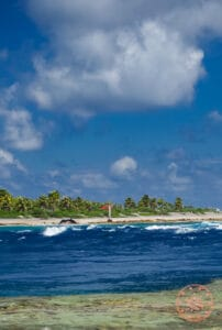things to do in rangiroa watch jumping dolphins
