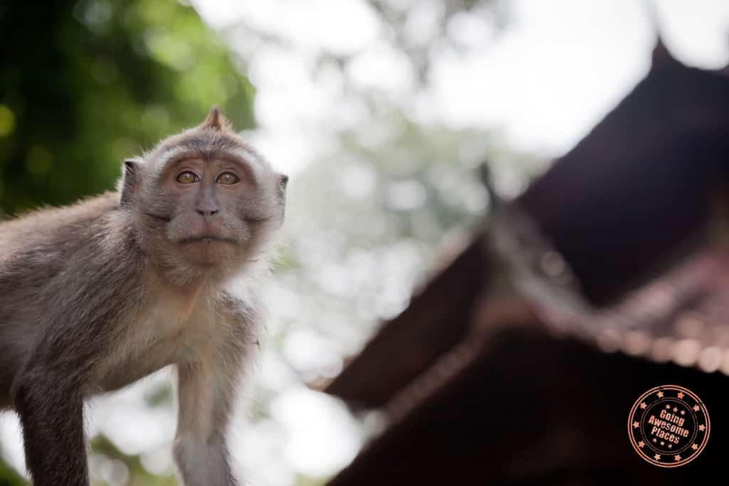 ubud bali monkey forest