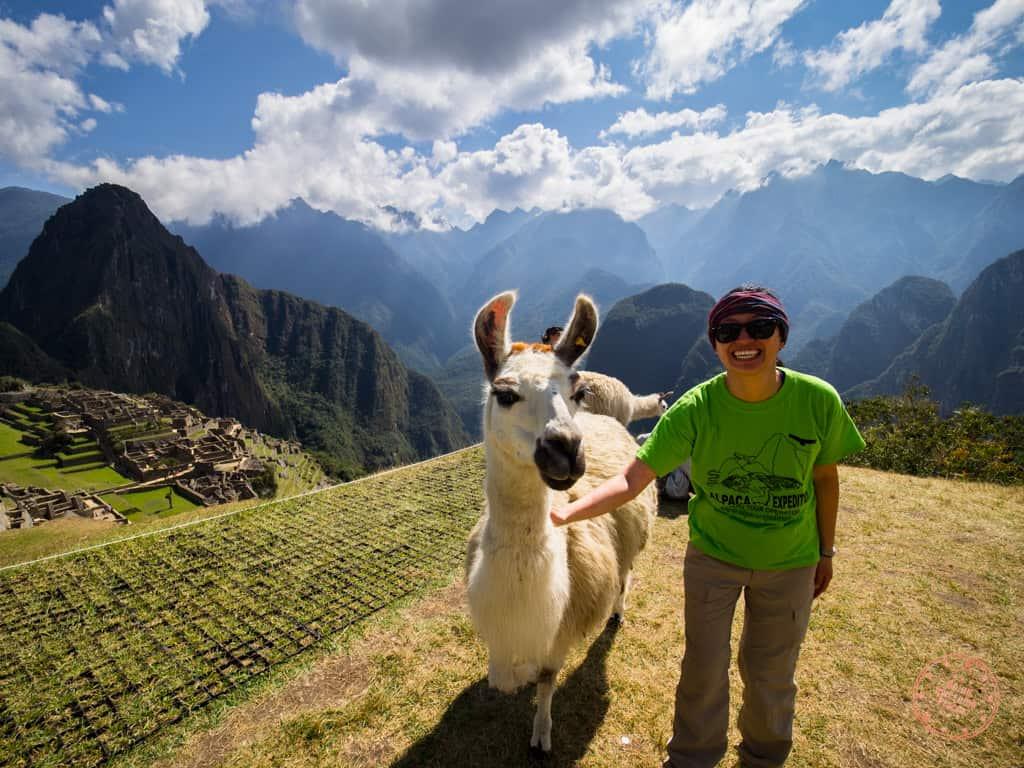 machu picchu and petting alpaca