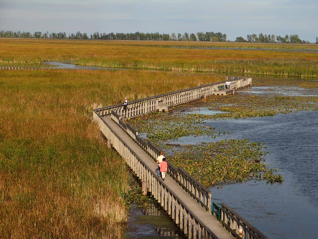 marsh board walk point pelee national park