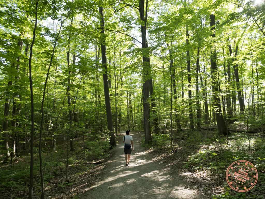 parks in vaughan maple nature reserve forest hike