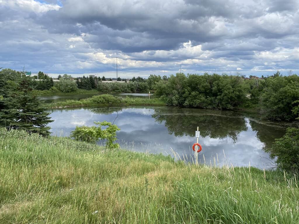 vellore neighbourhood walk wild berry pond