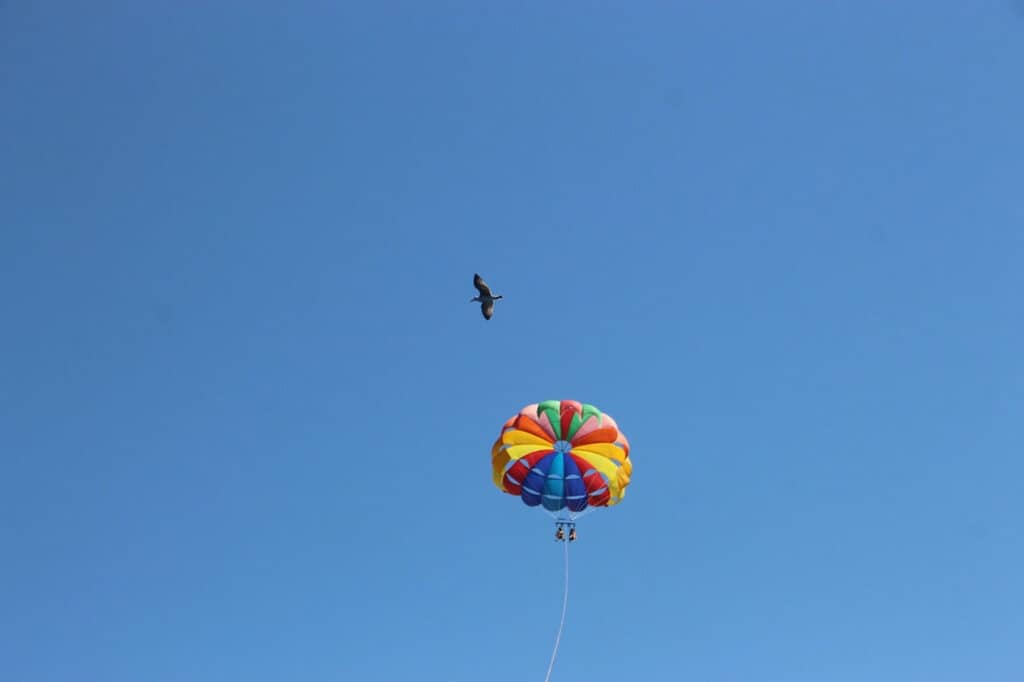 two people in the sky parasailing with a bird flying by.