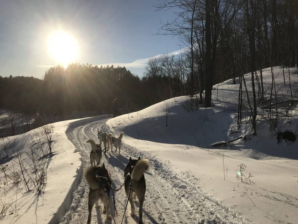 dogsledding experience in ontario with winterdance