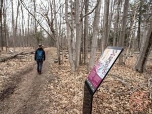 rouge river trail forest therapy in markham
