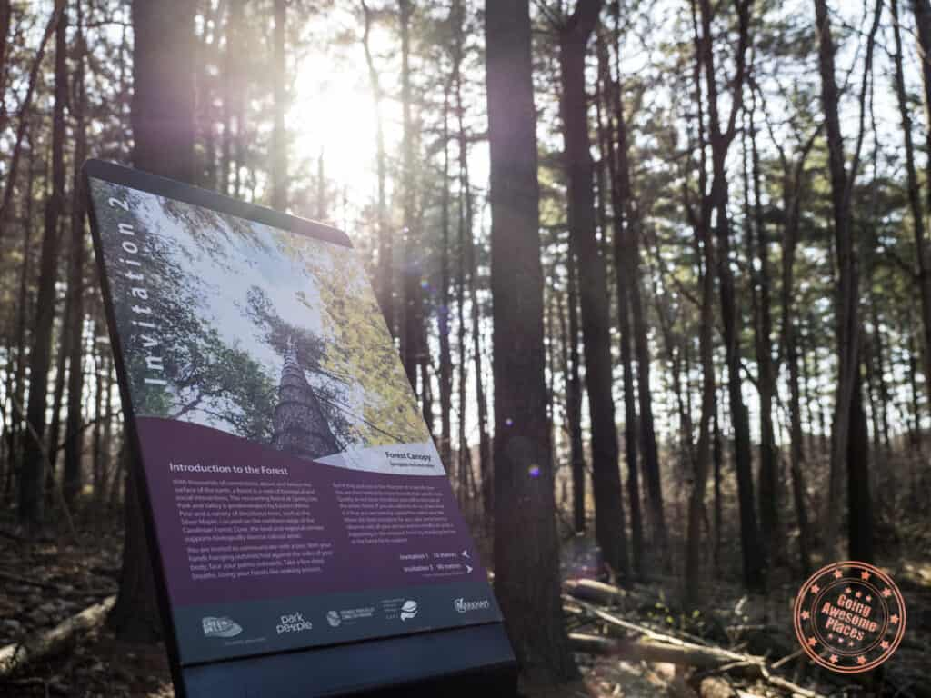 springdale park in markham forest therapy sign with sunflare
