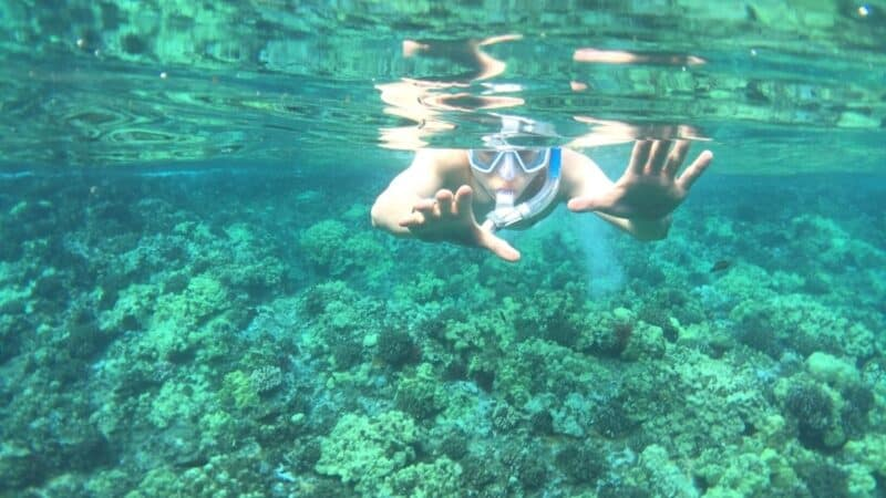 best snorkeling in maui featured