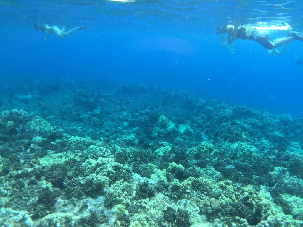 best snorkeling in maui molokini