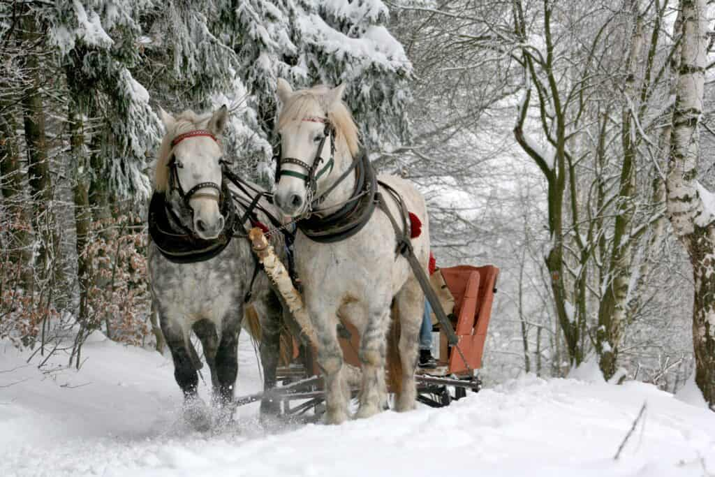 mountain springs lodge sleigh ride in the winter in things to do in leavenworth