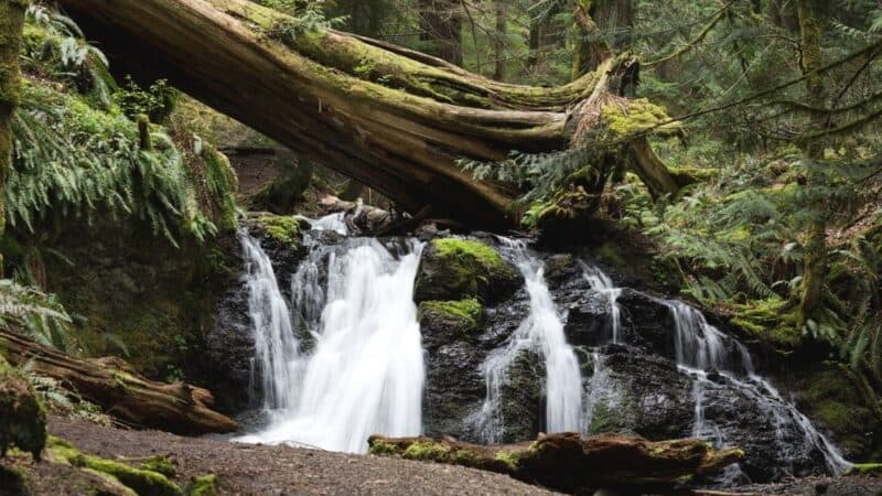 things to do in san juan islands featured