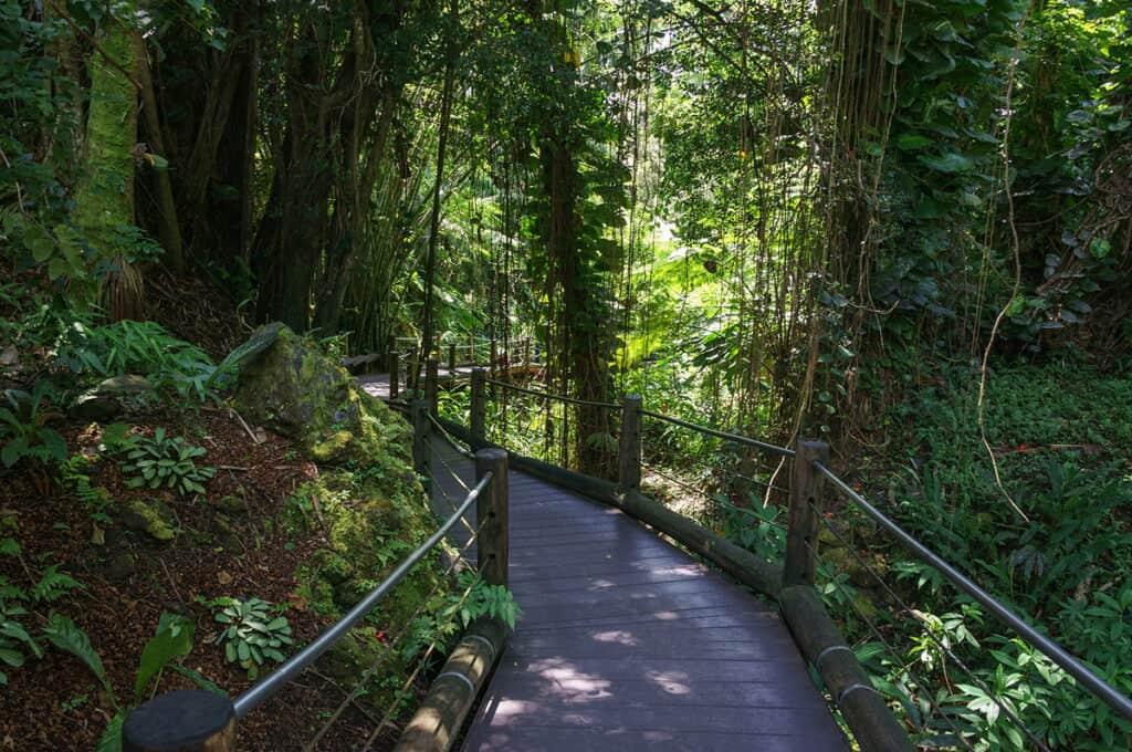 walking path in the hawaii tropical botanical garden