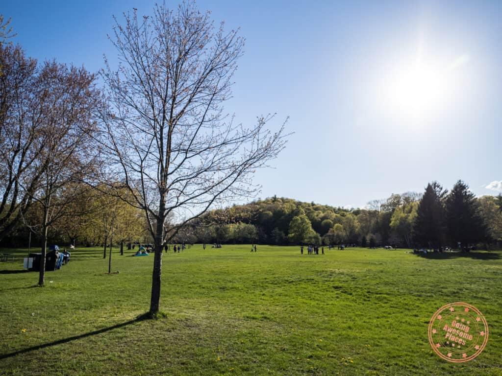morningside park open green space scarborough park
